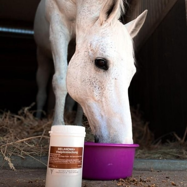 MELANOMA+ Pferde
